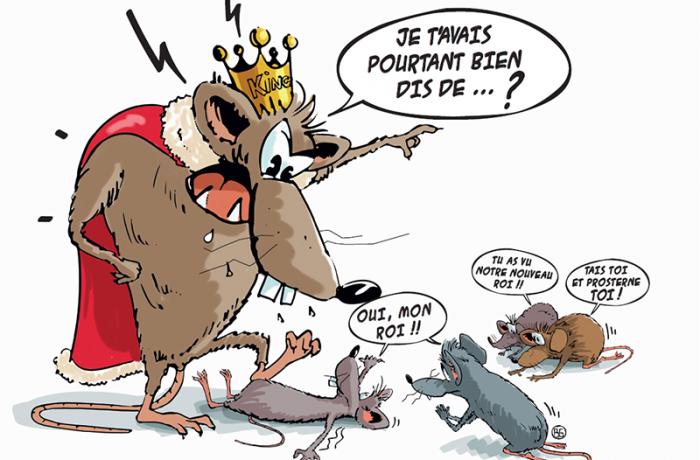 La hiérarchie dominant/dominé chez le Rat